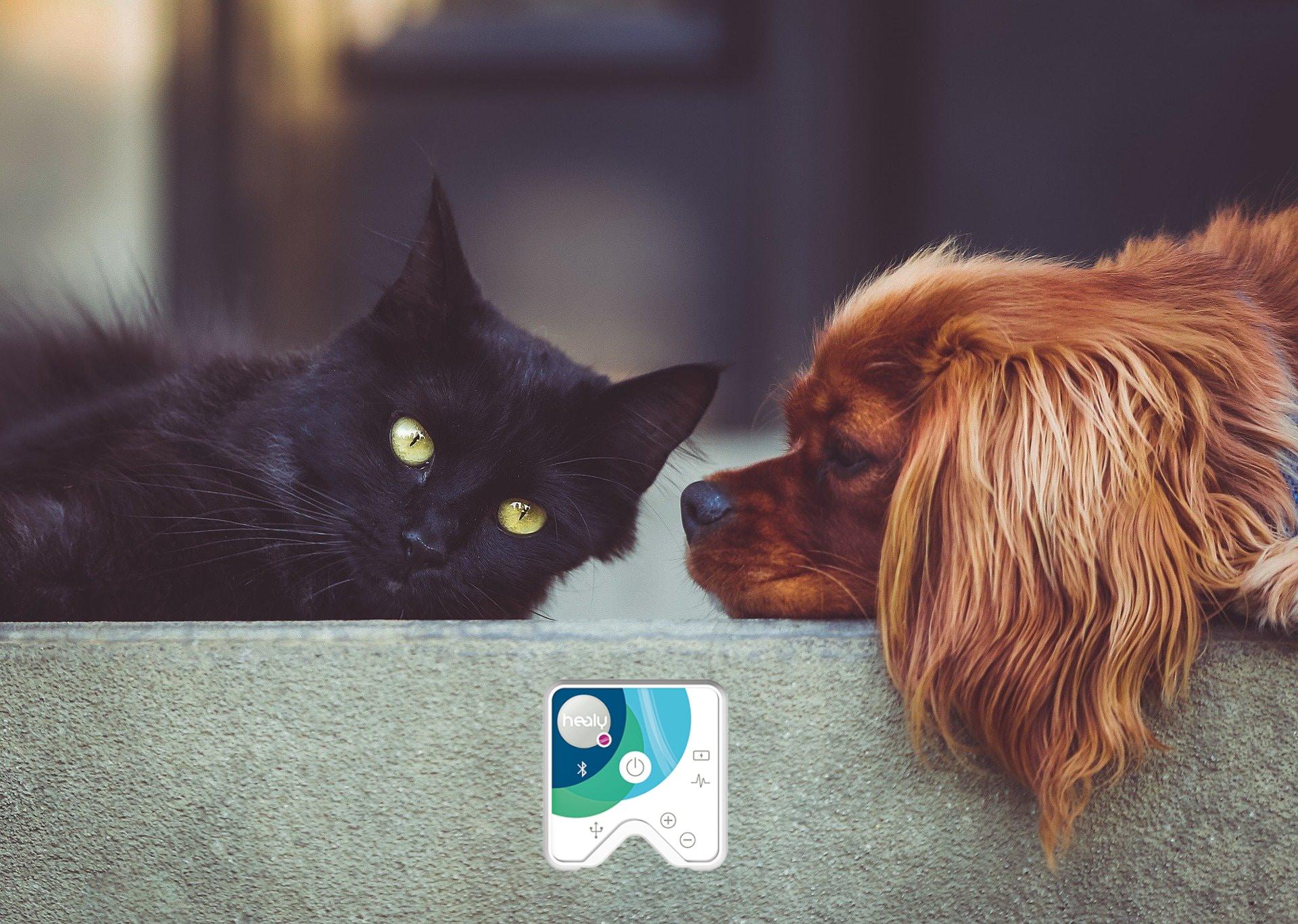 Hund und Katze mit Healy
